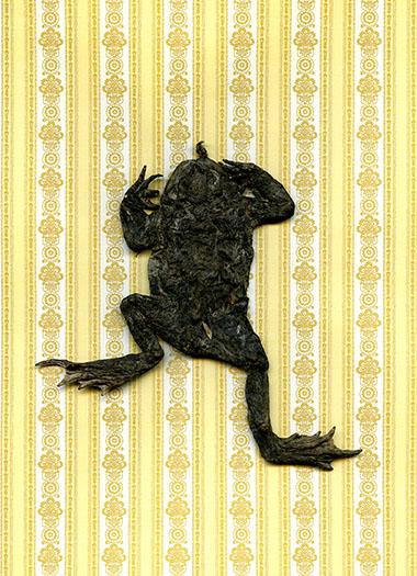 http://shannonguerrico.com/files/gimgs/37_frog003m-poussieres-ht50cm.jpg